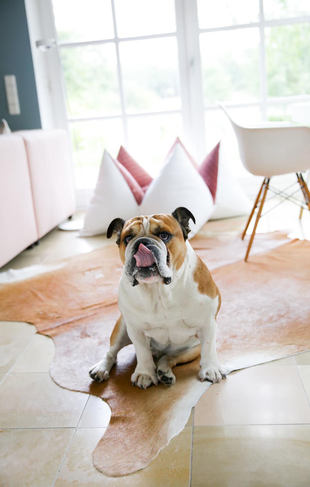 Sir Winston alias #WinnieWunschfrei im Flum Hundekissen
